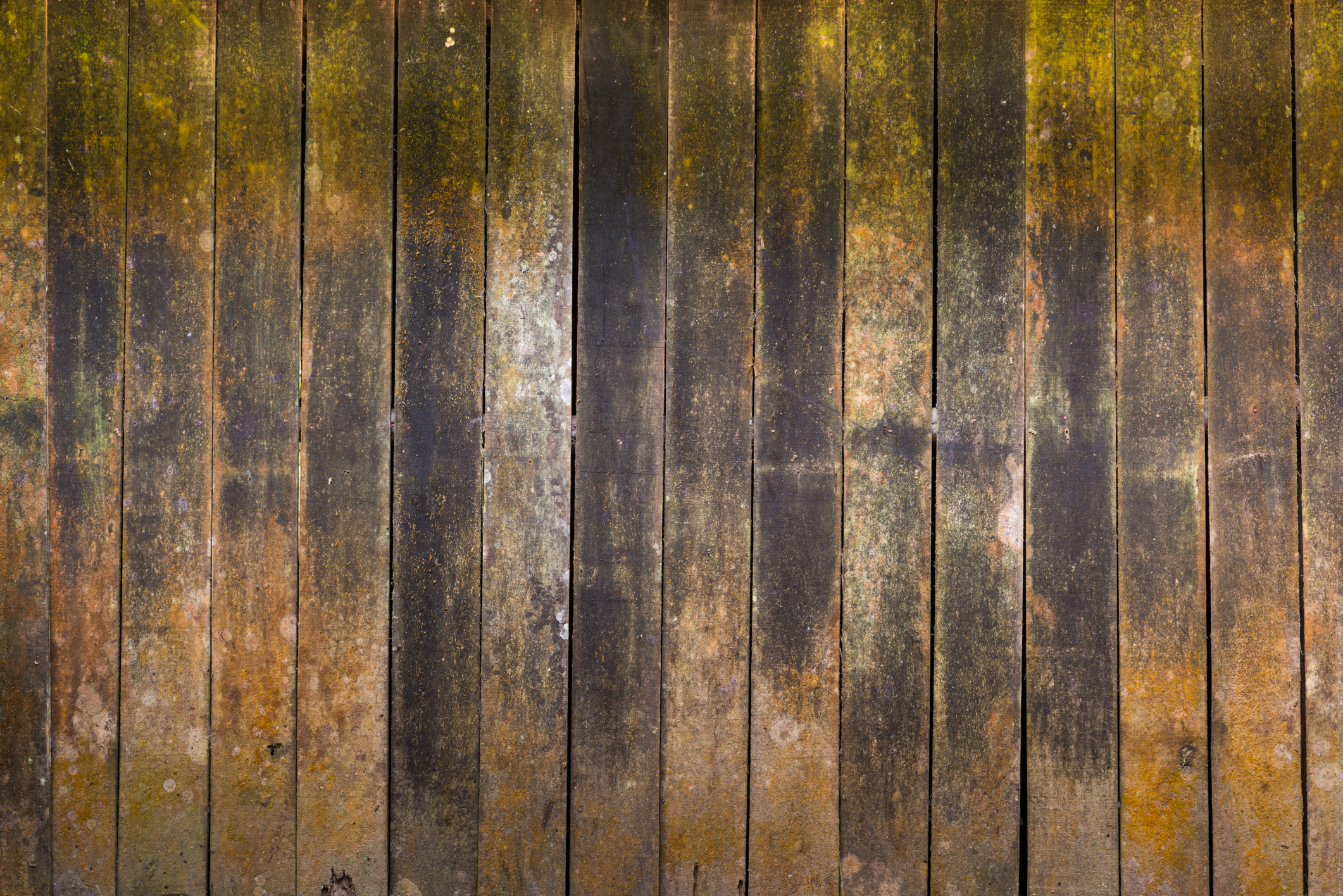 how to prevent termite damage to your wood fence